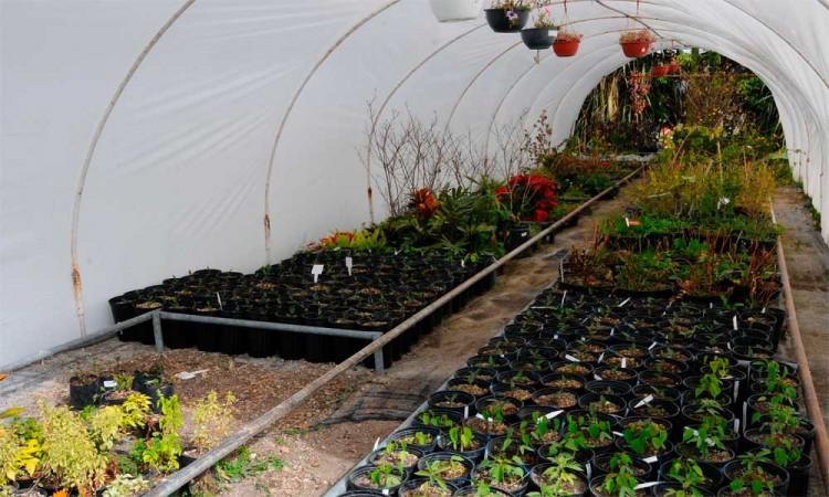 Vivero en  Herbario y el Jardín Botánico de la BUAP