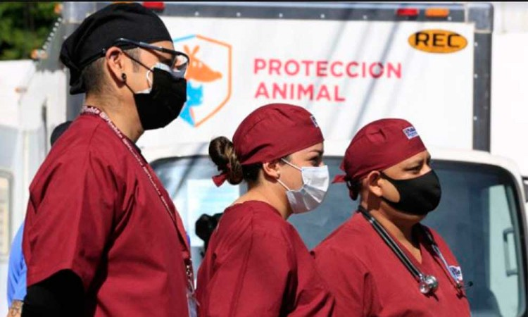 ¡Los michis y lomitos estarán a salvo! Equipan al Centro de Protección Animal zona norte de Puebla