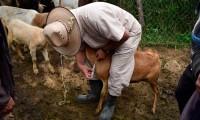 Ayuntamiento de Puebla capacita a ganaderos en uso de desparasitantes