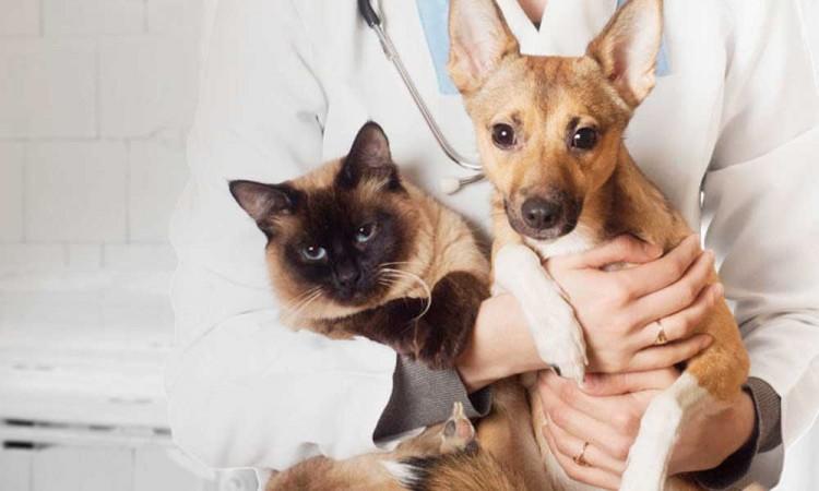 Conoce dónde esterilizar a tu mascota sin costo en Puebla