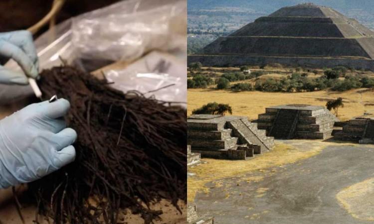 Descubren en Teotihuacán ramos de flores de más de mil 800 años de antigüedad