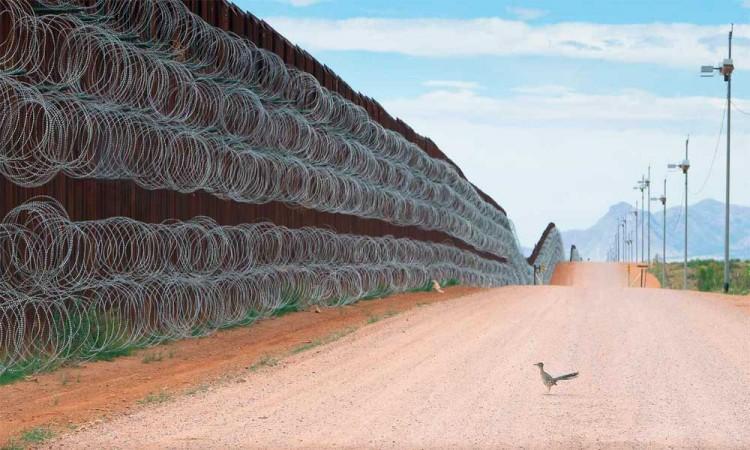Alejandro Prieto, fotógrafo mexicano, gana certamen internacional de fotografía silvestre