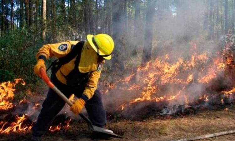 ¡BIEN! En Puebla se redujeron el número de hectáreas afectadas por incendios forestales