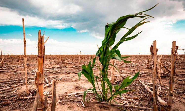 Sequía extrema en México, se decreta emergencia por falta de agua
