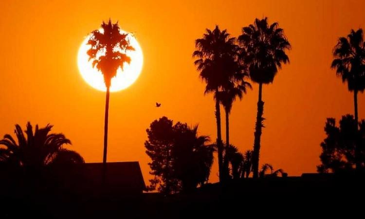 ¡Alarmante! Julio de 2021, fue el mes más caluroso jamás registrado en la Tierra