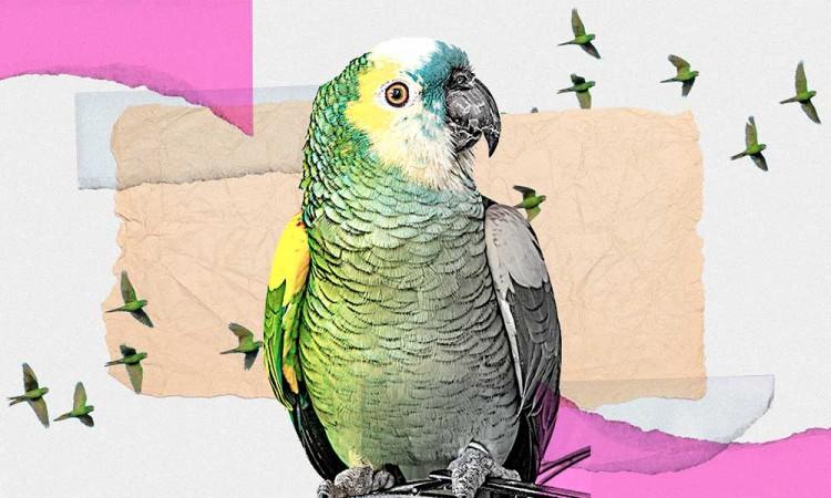 Tráfico de animales exóticos en Puebla, dispara lucha por el hábitat entre pericos y aves endémicas de la entidad