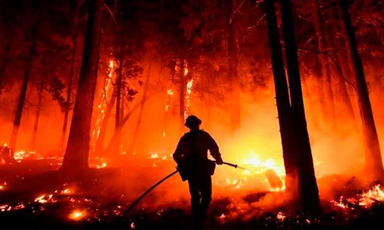 Continúan los incendios forestales en California, ponen en peligro las secuoyas más grandes del mundo