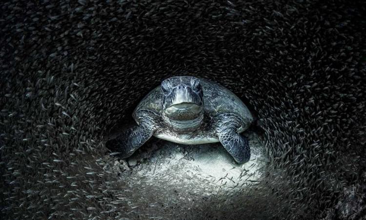 Estas fueron las mejores fotos de la vida marina del 2021 según Oceanographic Magazine