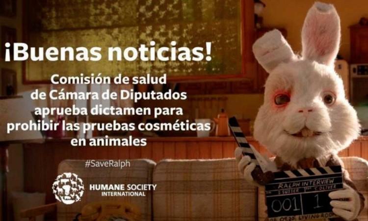 ¡Ralph lo logra en México! El Senado prohíbe el uso de animales en pruebas para cosméticos