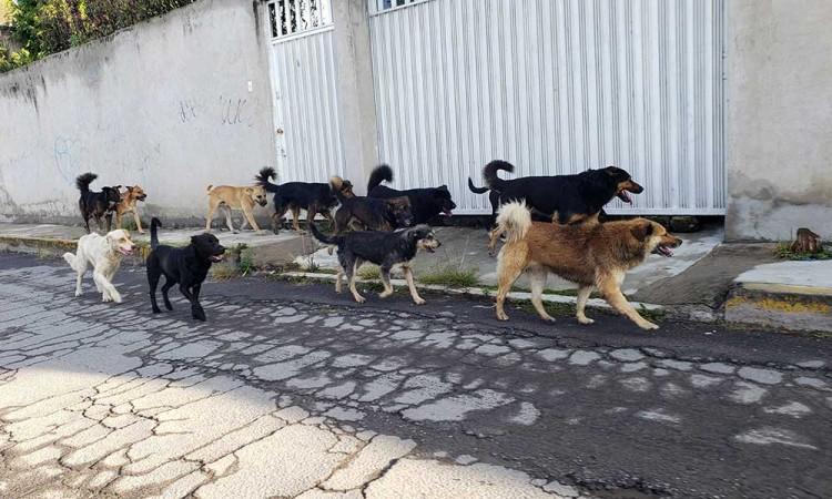 ¡Con los michis y lomitos no! En Mérida multarán a quien alimente animales en la calle