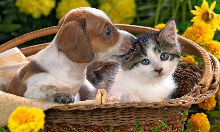 Regalatiempo a tus mascotas