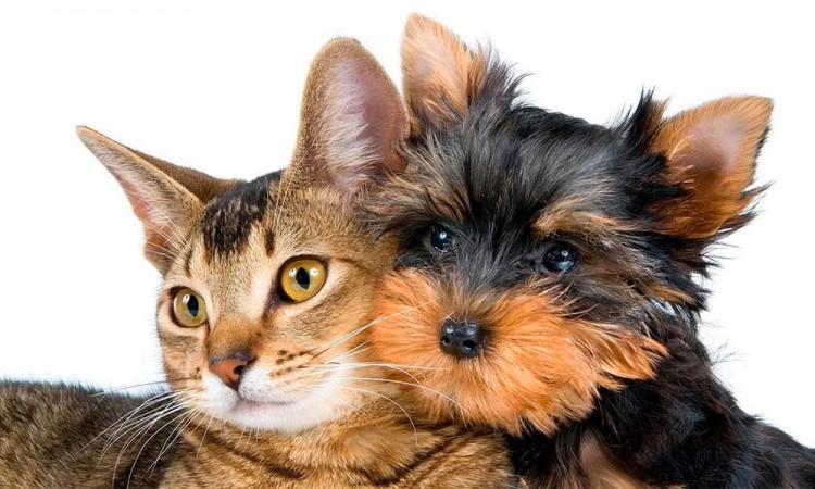 Arma tu kit para gatos y perros