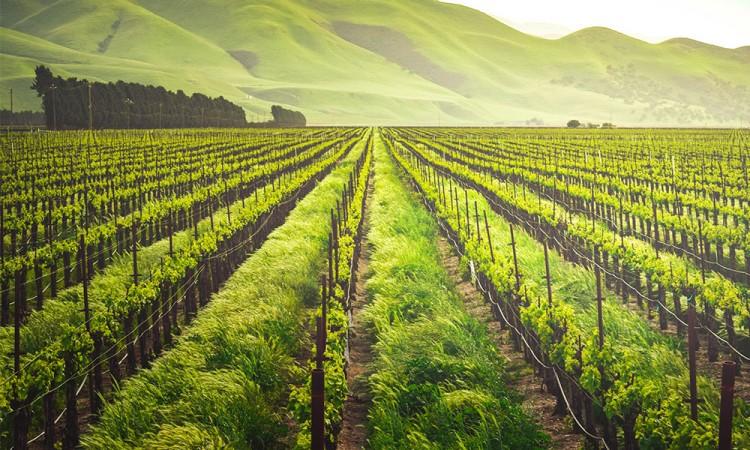 ¿Qué es la gastronomía sustentable?