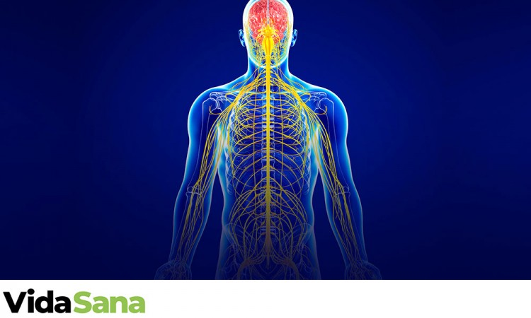 ¿Qué es el sistema inmunitario?