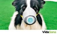 ¿Mi mascota se puede contagiar de coronavirus?