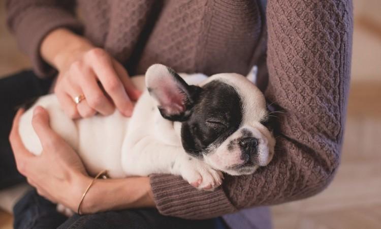 Cuida la salud de tu familia y mascotas