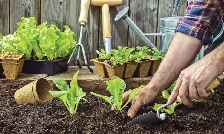 Plantas que puedes cosechar rápidamente