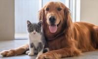 Mascotas: tus mejores aliados en tiempos de coronavirus