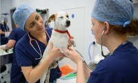 ¿Qué hacer en caso de necesitar atención médica para mi mascota?