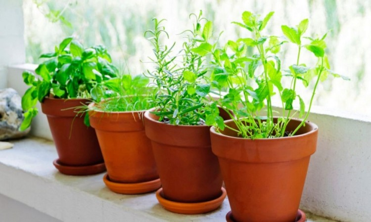 Crea tu huerto de plantas aromáticas