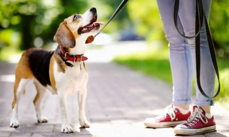¿Cómo quitarle el mal olor a mi perro sin bañarlo?
