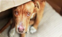 Señales de estrés en tu perro