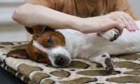 Técnicas para relajar a tu mascota