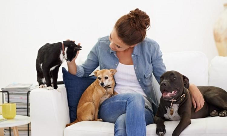 ¿Cómo mantener limpia tu casa si tienes mascotas?