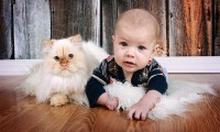 ¿Qué raza de gato es ideal para convivir con un niño?