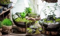 ¿Cómo hacer un terrario en casa?