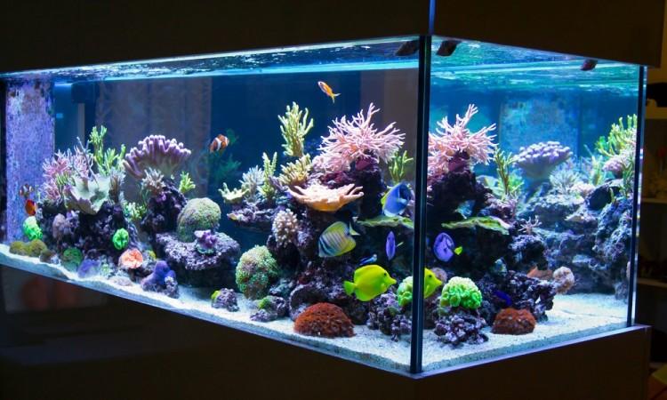 ¿Cómo decorar un acuario?
