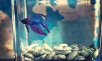 Tipos de pez para tener en casa