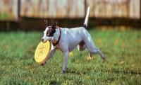 Consejos para calmar a un perro hiperactivo