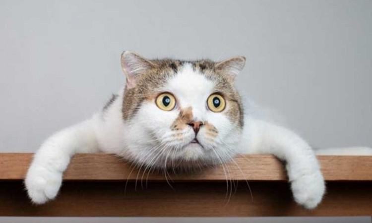 Estudio revela que los gatos pueden contraer covid-19