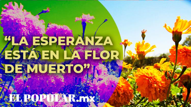 La flor de Cempasúchil simboliza el Día de Muertos en México.