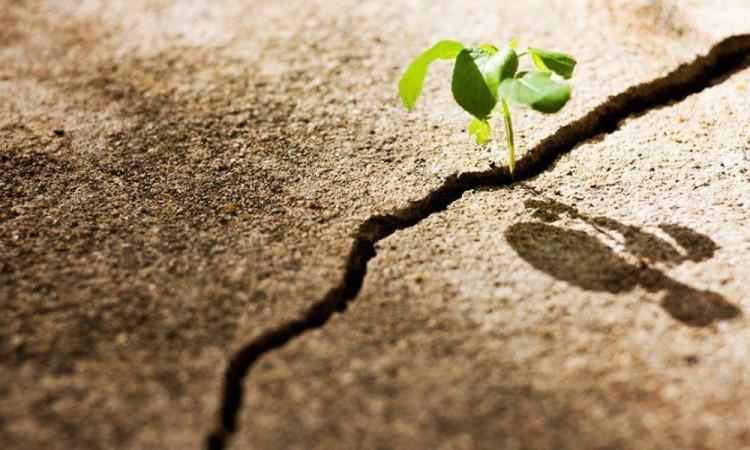 Tiempos de practicar la resiliencia.