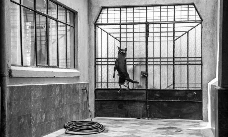 "Esta es la historia del ""Borras"", el famoso perrito de Roma"