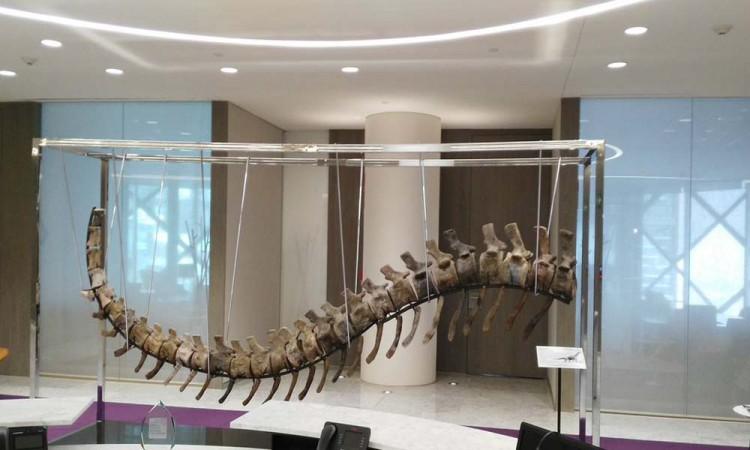 Subastan cola de dinosaurio para ayudar a México