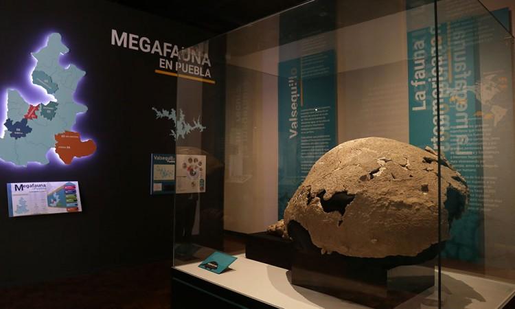 Exhiben nuevas piezas antiguas en el Museo Regional