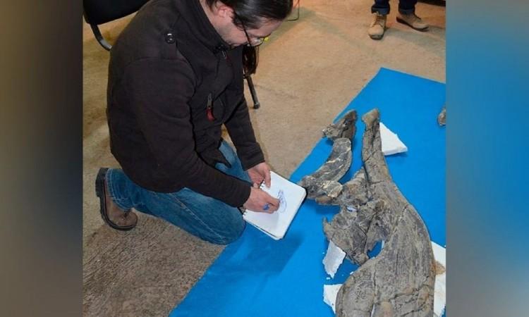 Descubren en México nueva especie de dinosaurio, habría muerto hace 73 millones de años