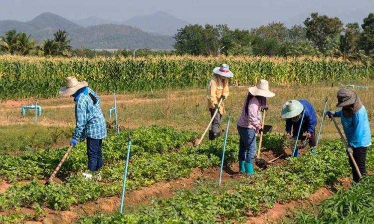Agrónoma mexicana es premiada por apoyar a población rural vulnerable