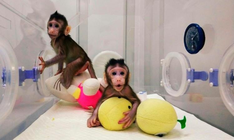 Científicos clonan los primeros primates en China
