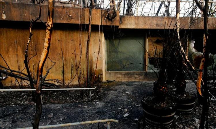 Incendio mató a más de 30 animales en zoológico de Alemania