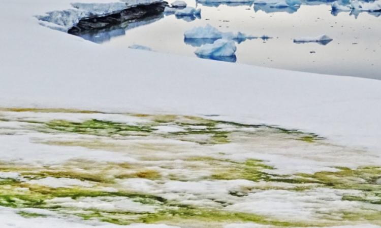 Cambio climático enverdece la Antártida