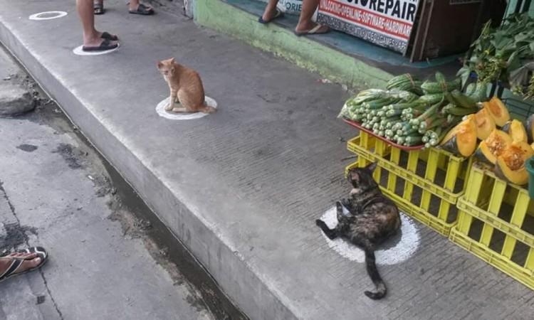 Gatos, los únicos que respetan la Sana Distancia