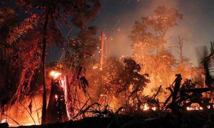 Deforestación en la Amazonía amenaza con nueva ola de incendios