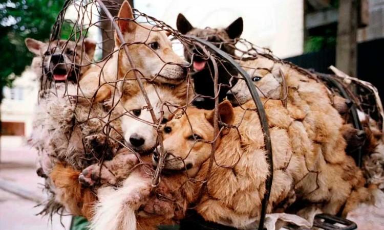 Aun venden carne de perro en festival de China