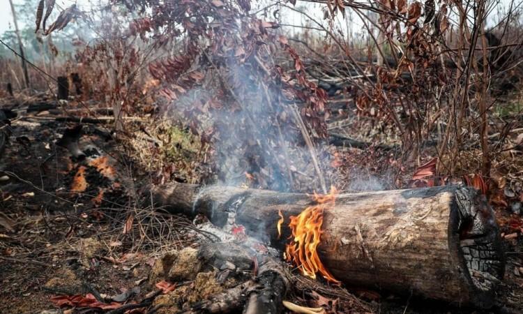 Deforestación en la Amazonía peruana baja 28 % durante cuarentena