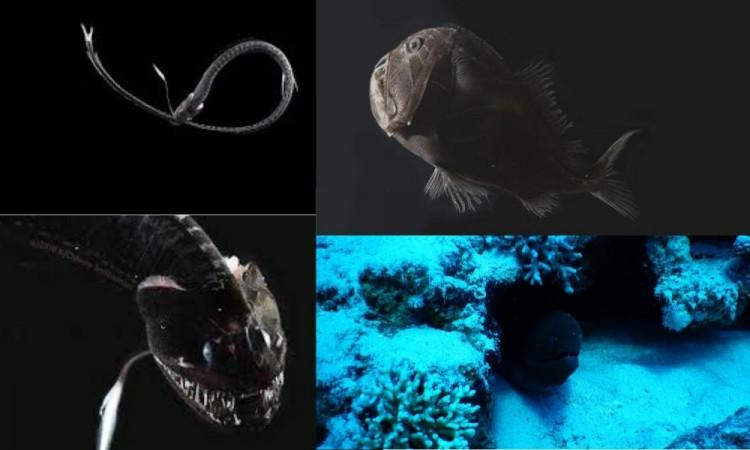 ¿Sabes cuál es el secreto detrás de la capacidad de algunos peces para desaparecer en aguas profundas?
