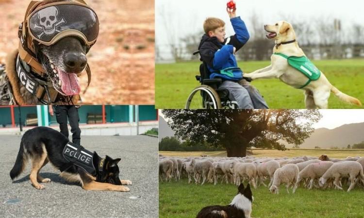 Profesiones imprescindibles de los perros